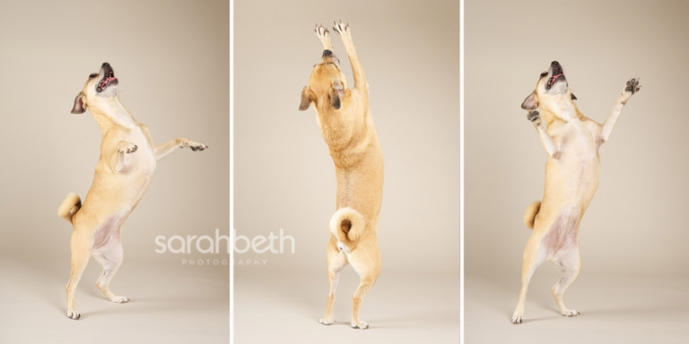 triptych, dancing dog