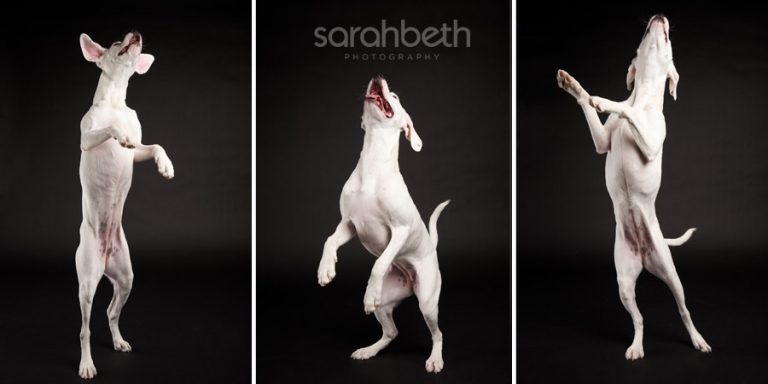 series of jumping puppy