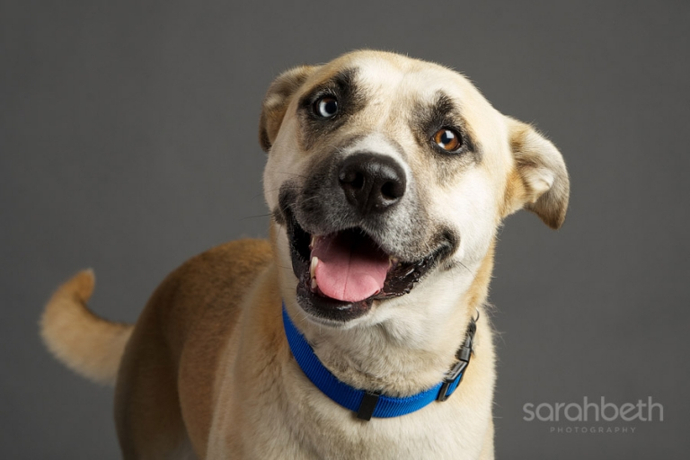 adoptable dog in the minneapolis metro area