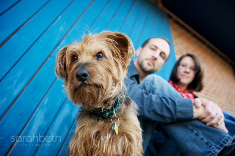 small dog with his family on blue