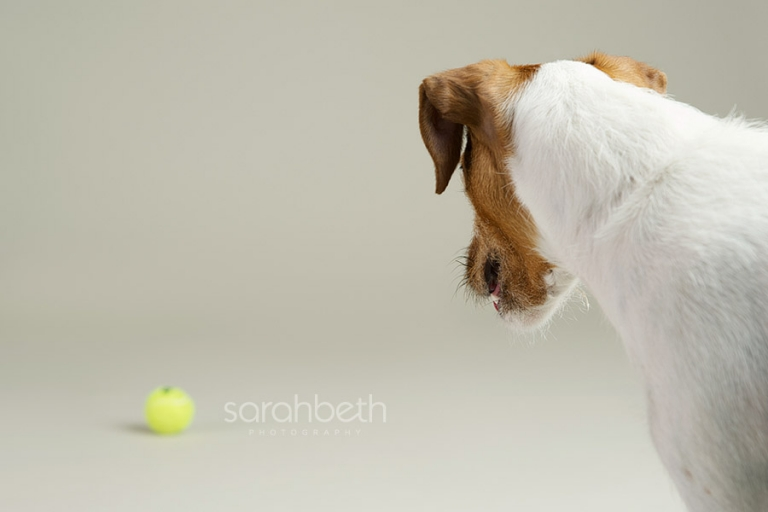 looking at a tennis ball in a photo studio