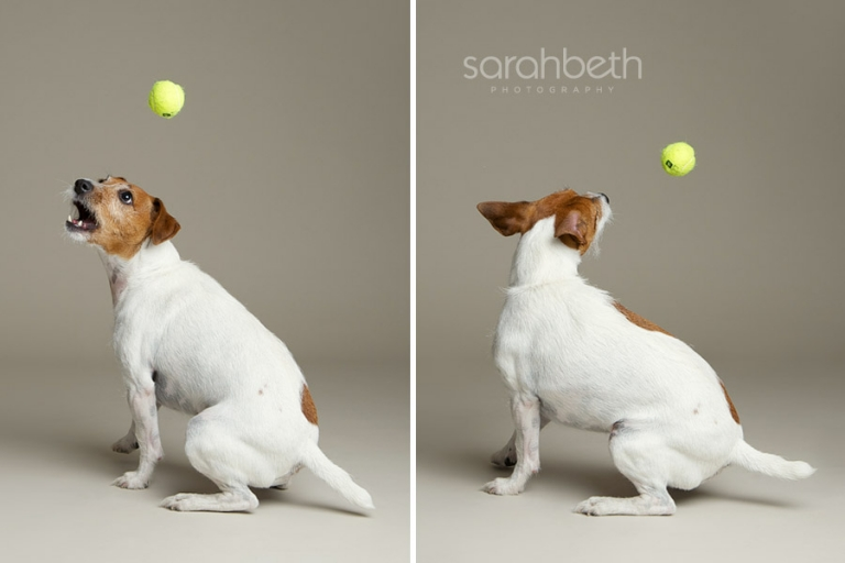 saint paul dog photo studio tennis ball