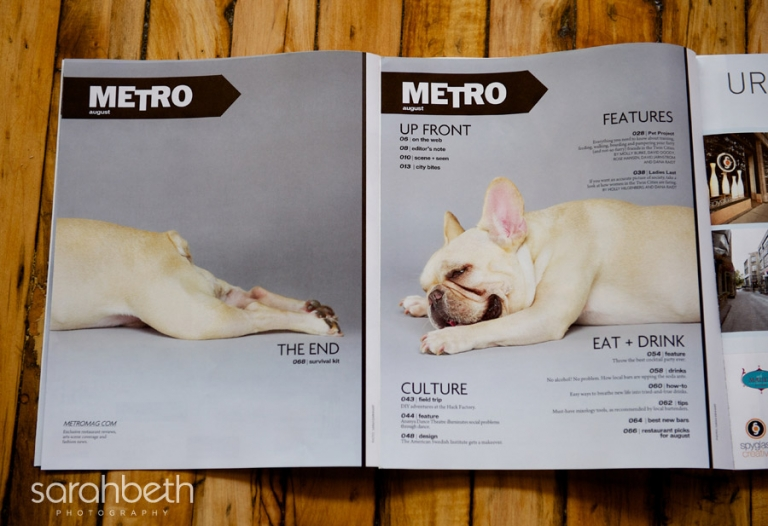 published french bulldog image