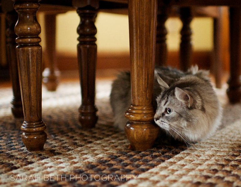 kitty hiding under a table
