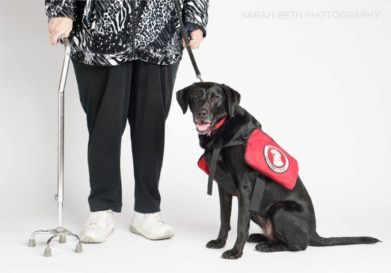 black lab diabetes assistance dog with her human partner