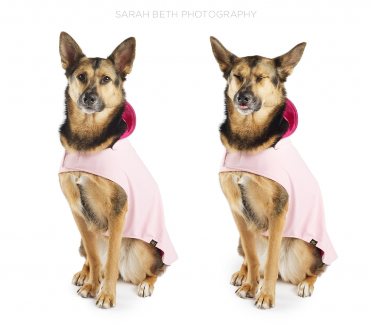 german shepherd mix, smiling, pink dog coat
