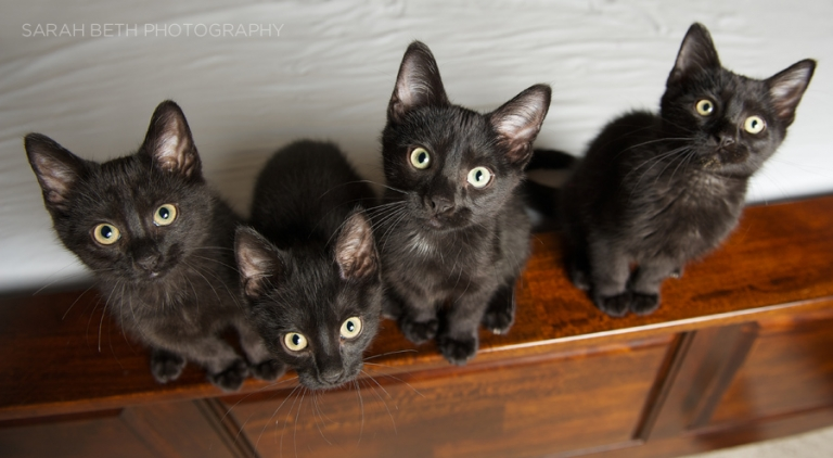 black kitten litter, minneapolis cat photography