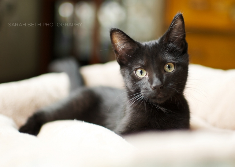 curious black kitten photo
