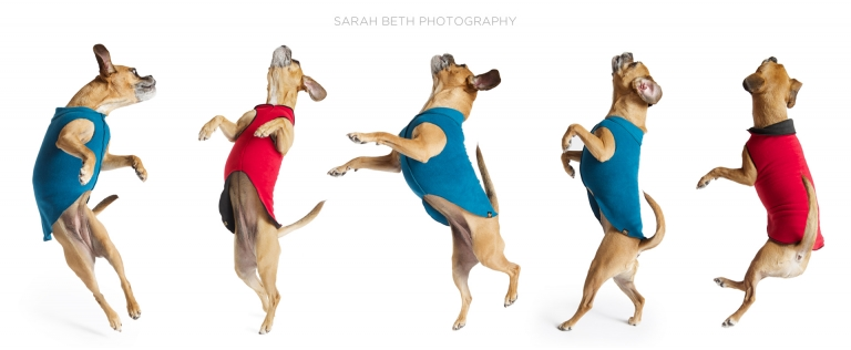 jumping series of puggle in blue and red coats