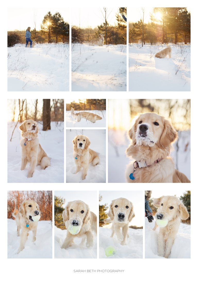 snow, dawn, golden retriever, minnesota