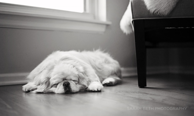 black and white, sleeping dog