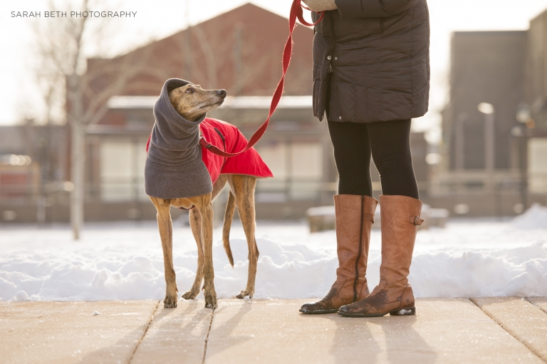greyhound, winter, coat, snood